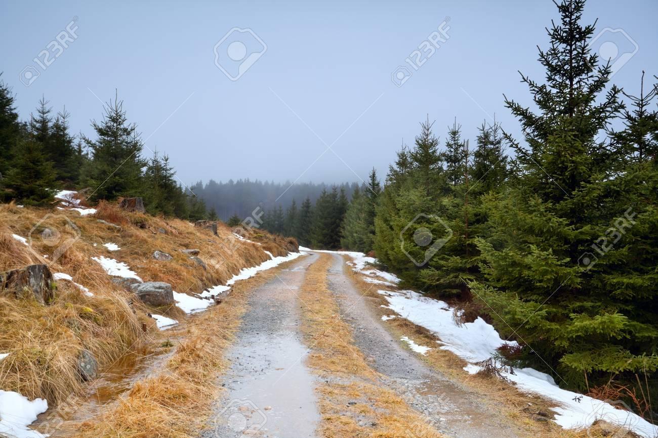 冬季は、ハルツ山地の針葉樹林を...