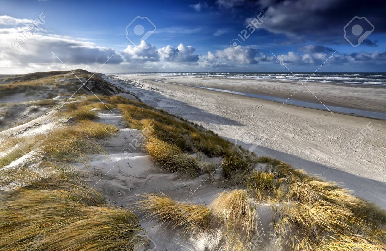 view from sand dune on north sea coast, Texel, Netherlands - 97556339