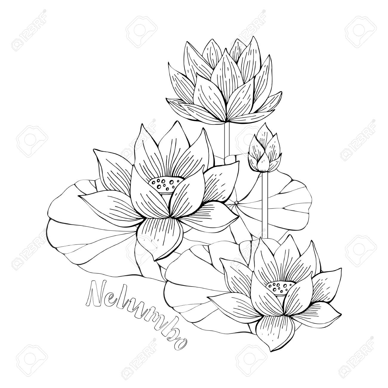 Coloring Pages With Lotus Flowers Zentangle Illustrations For