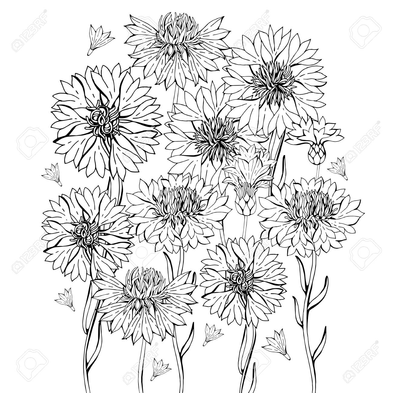 Coloring pages with cornflower flowers, zentangle illustrations..