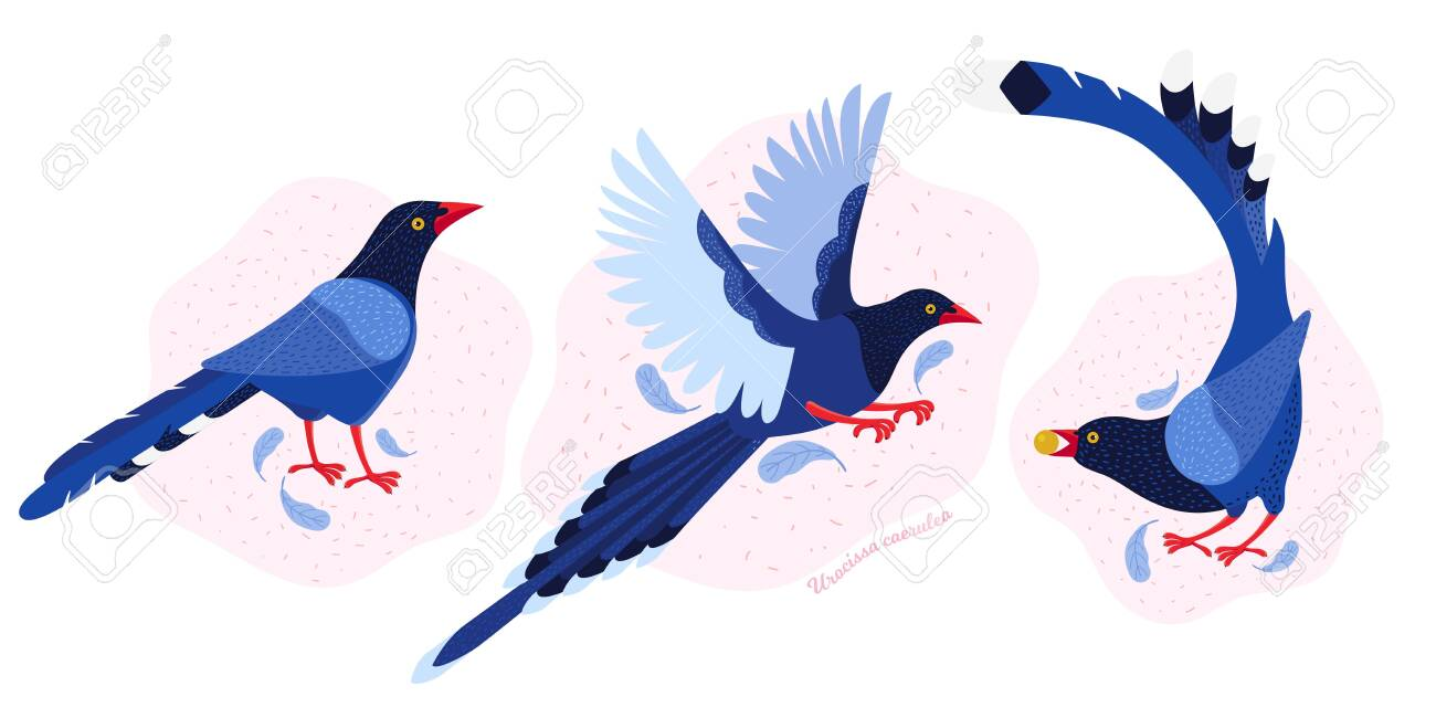 Taiwan azure magpie. Set exotic birds of Taiwan and of Asia. Urocissa caerulea. Cute Blue cartoon bird a in different poses and movements. Hand drawn vector flat illustration in Scandinavian style - 140235465