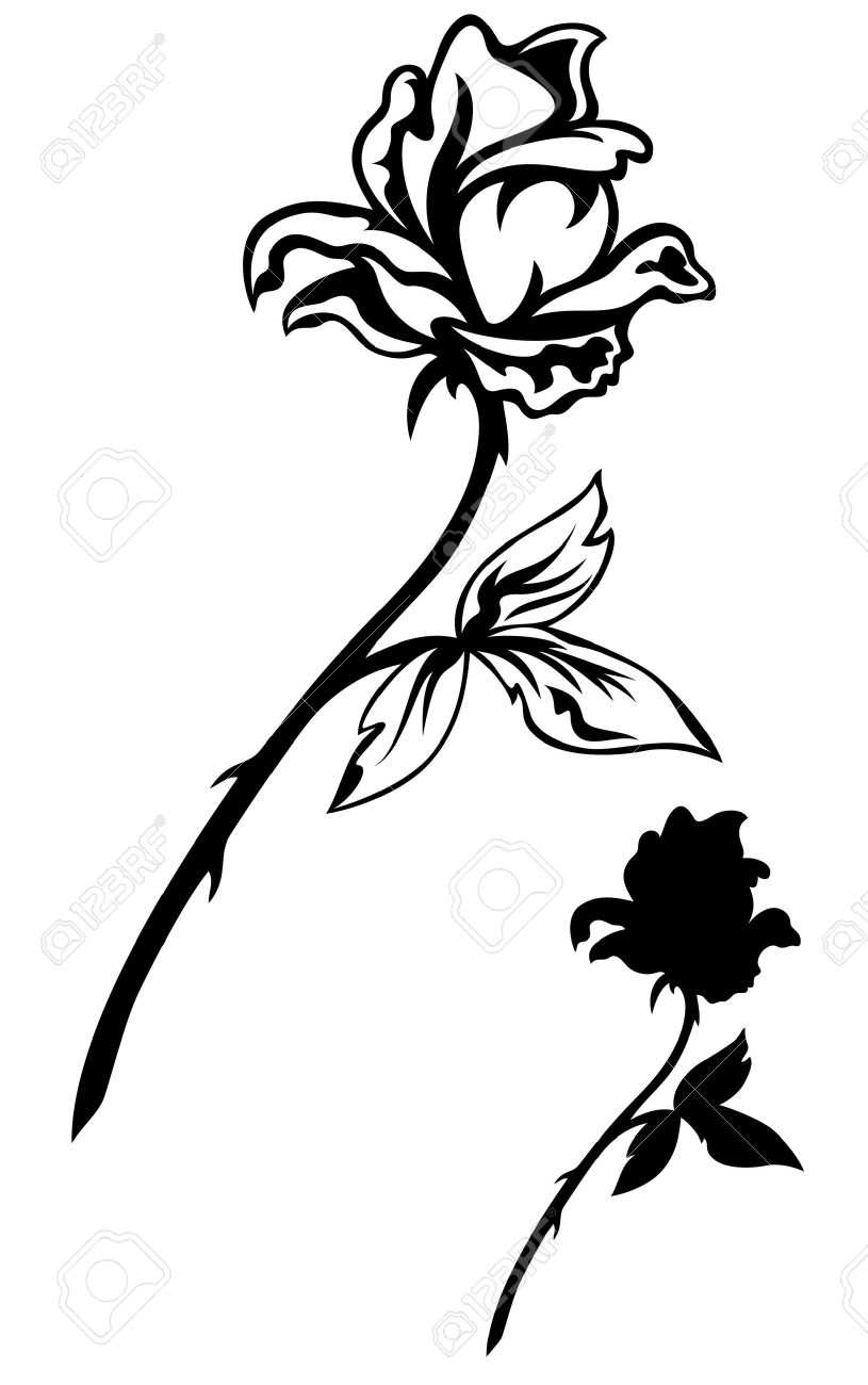 elegant rose illustration - outline and silhouette Stock Vector - 10356277