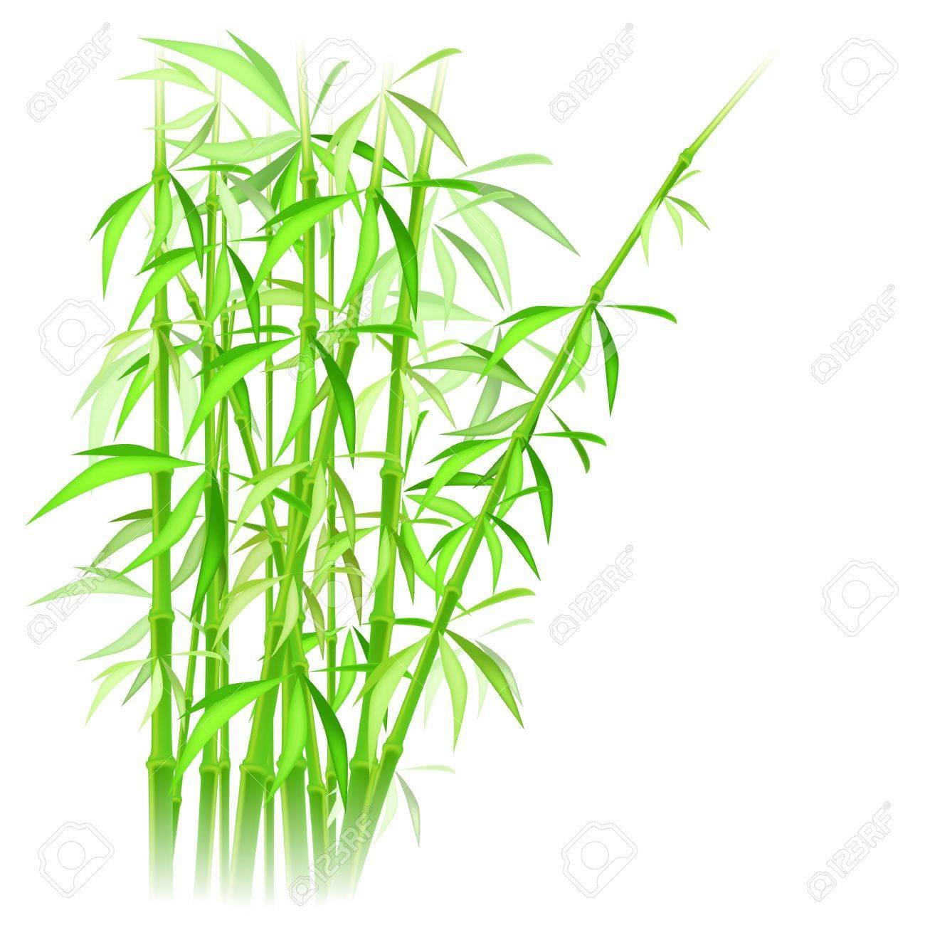 bamboo vector illustration - 11253554