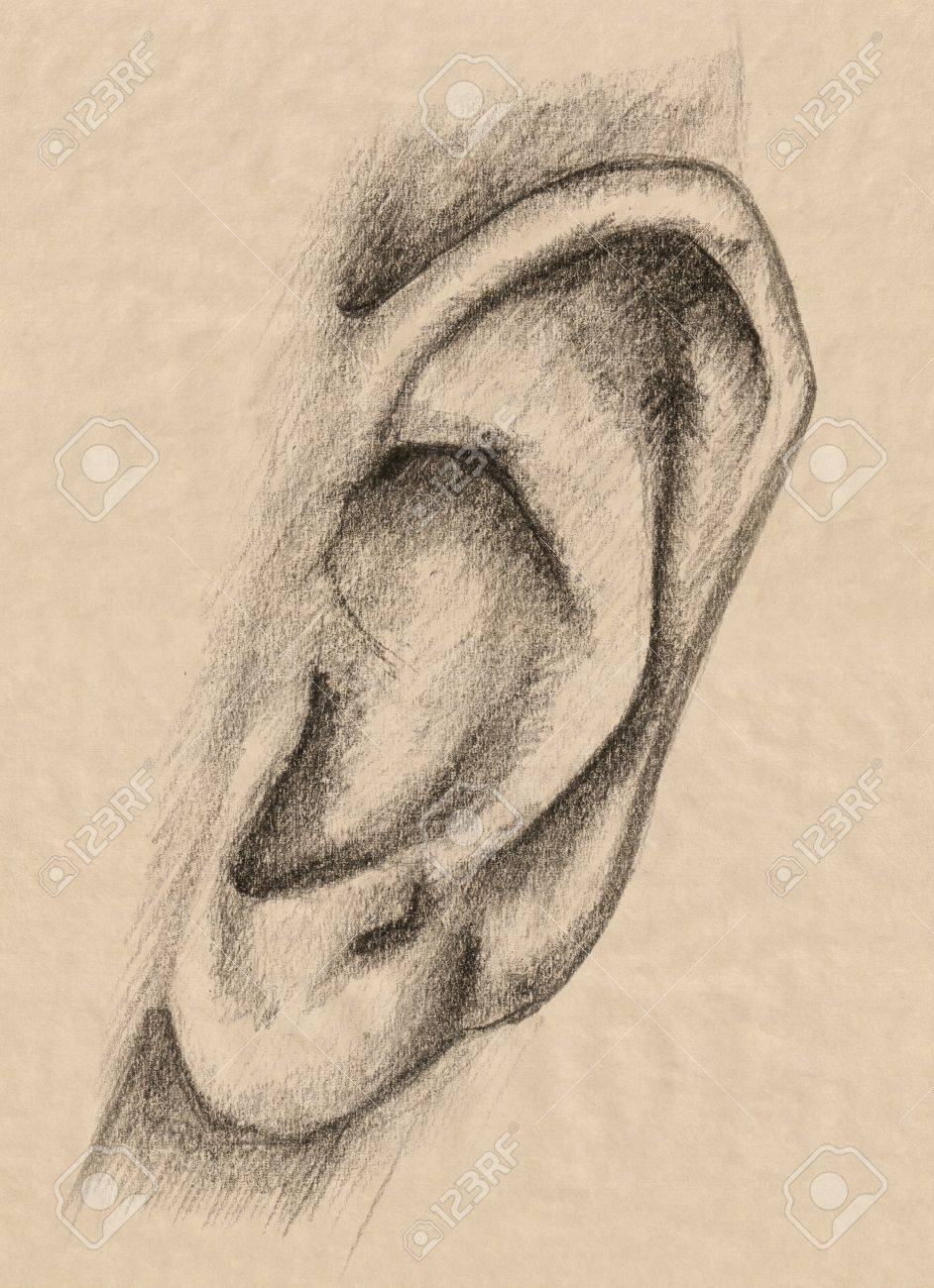 Ear Pencil Drawing