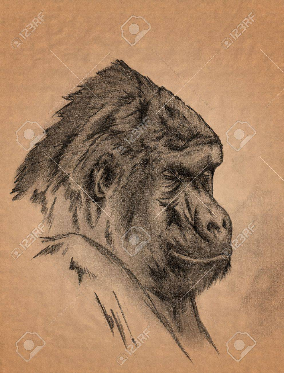 Mountain gorilla portrait freehand sepia toned pencil drawing