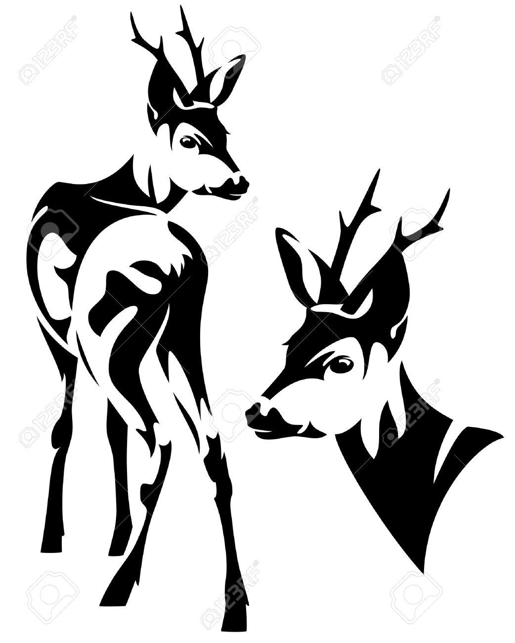 elegant roe deer Capreolus capreolus black and white vector outline - standing animal and head design - 25550376