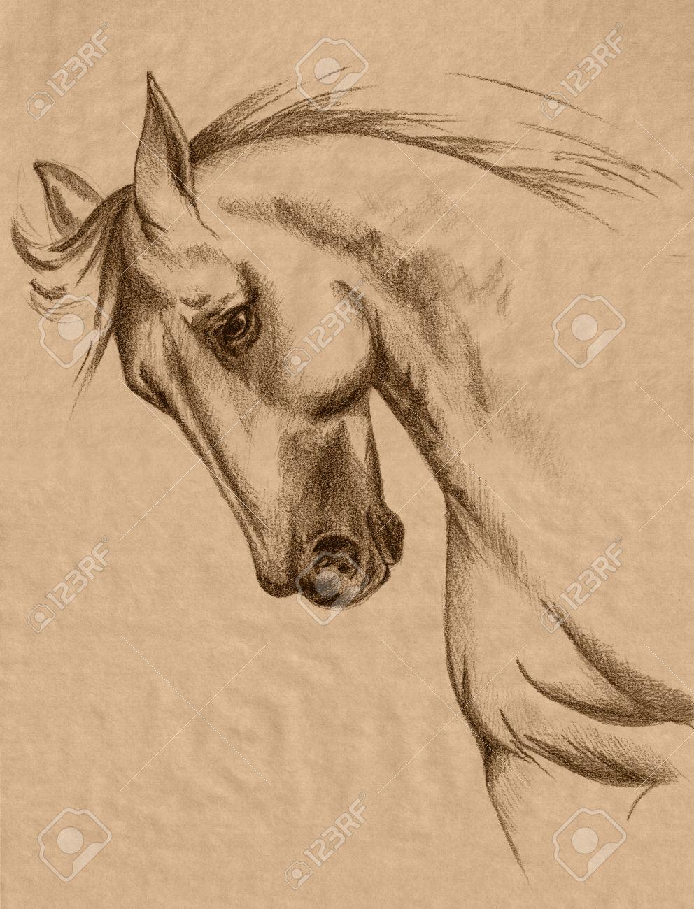 Très Cheval à Main Levée Tête Sépia Dessin Au Crayon - Réaliste Croquis  WE02