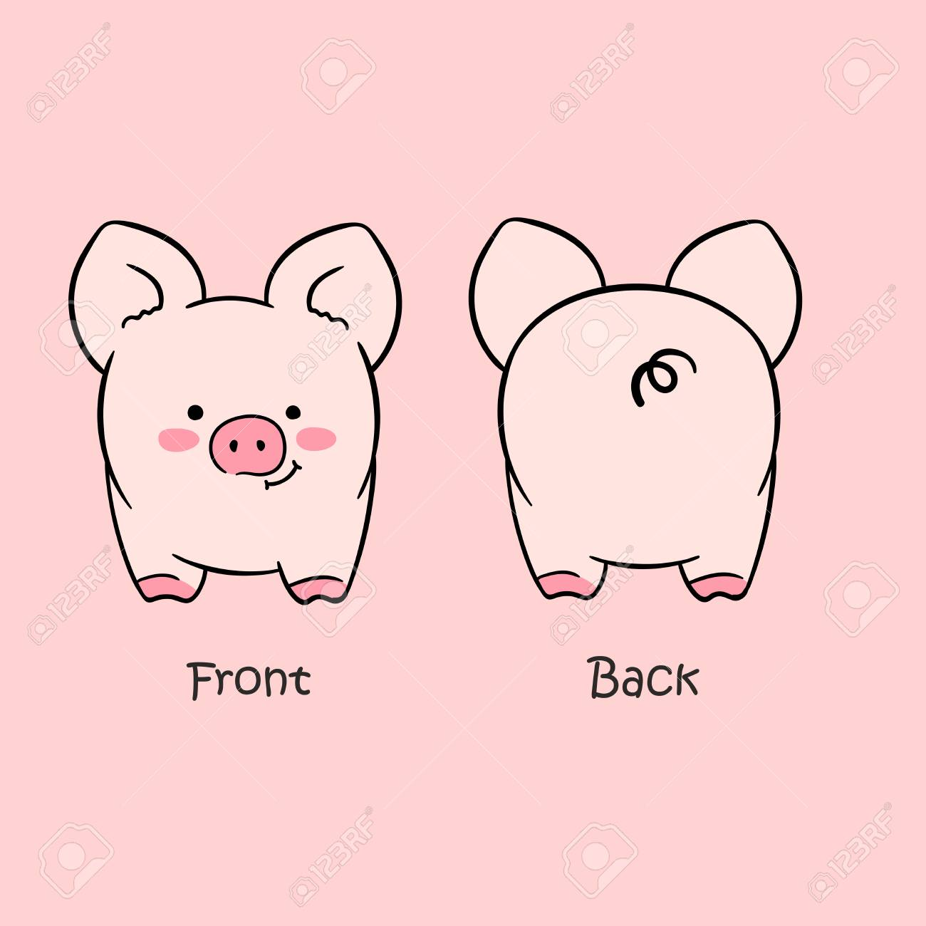 vector illustration of cartoon cute pink pig front view and back