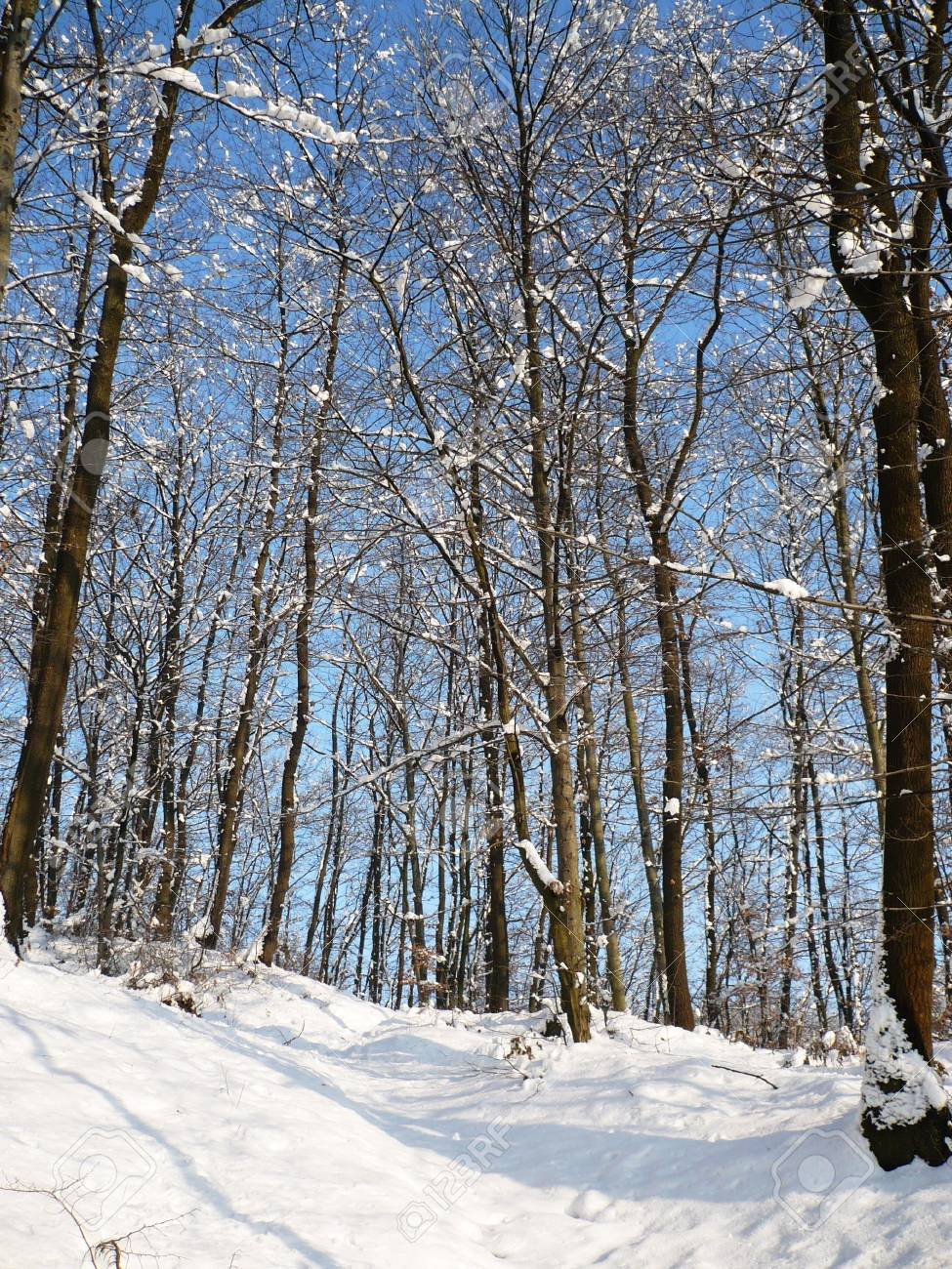 winter season 2011 and nature Stock Photo - 11042868