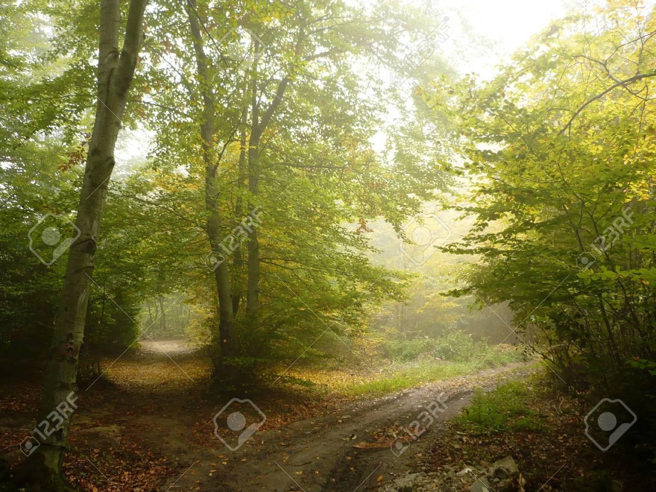 autumn of nature Stock Photo - 11126299