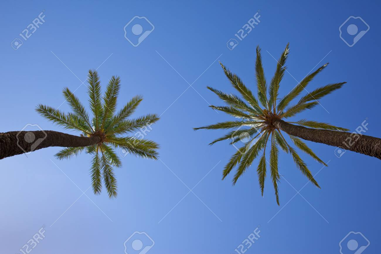 palm trees Stock Photo - 5041313