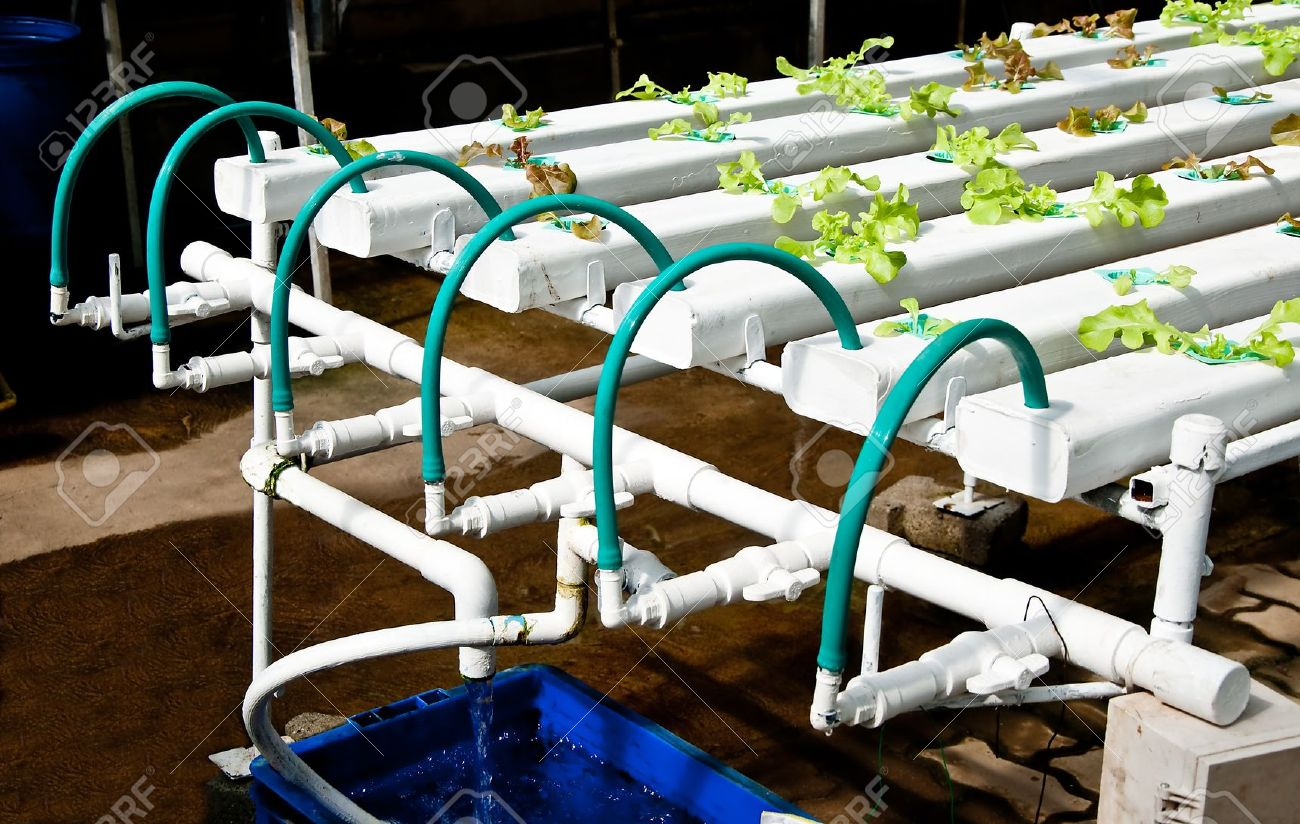 The Organic Hydroponic Vegetable Garden Stock Photo Picture And