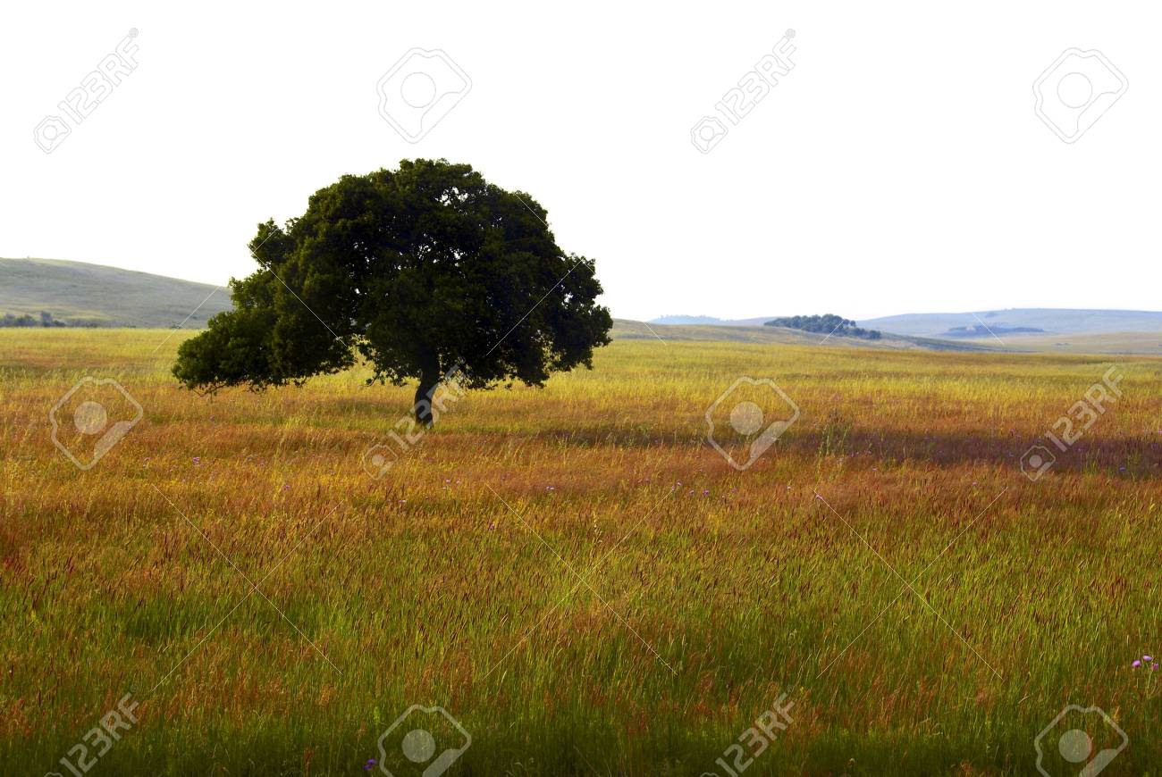 View of a countryside landscape with an isolated tree. Stock Photo - 2422877