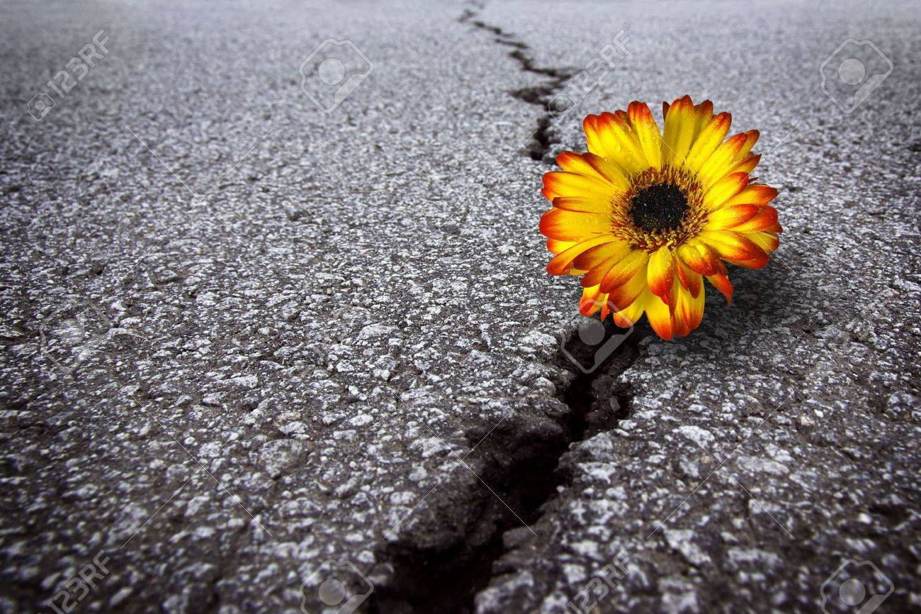 Beautiful flower growing on crack in old asphalt pavement - 5990734
