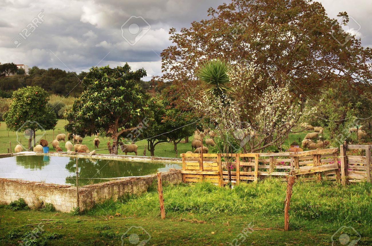 Landelijke Scene Van Een Prachtige Groene Tuin Met Bomen En Schapen