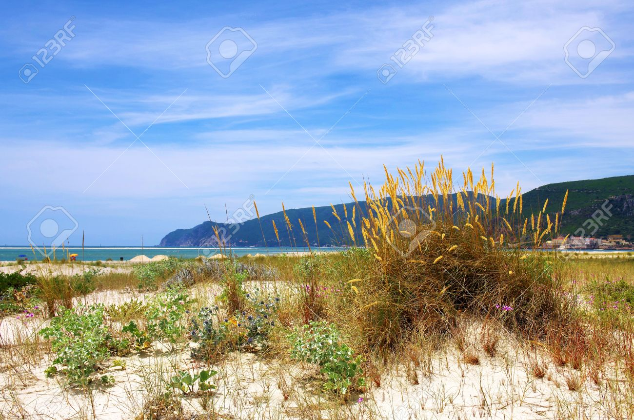 Beach landscape with dunes and wild vegetation and the sea in the background Stock Photo - 14088796
