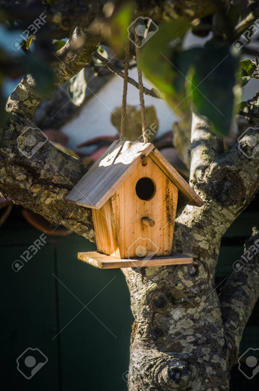 Admirable Little Wooden Bird House Hanging On A Tree Branch Download Free Architecture Designs Scobabritishbridgeorg
