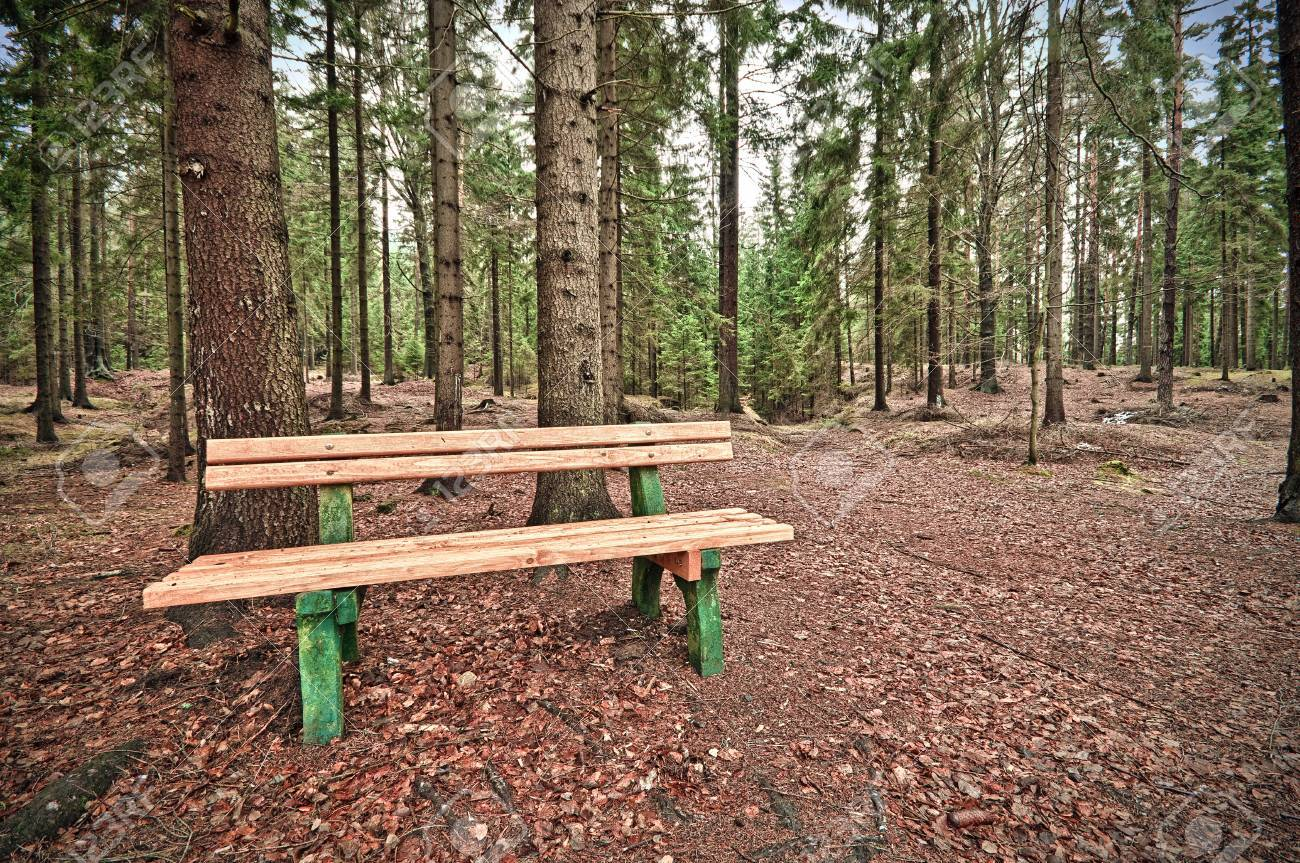 Bench deep in the forest Stock Photo - 11966471