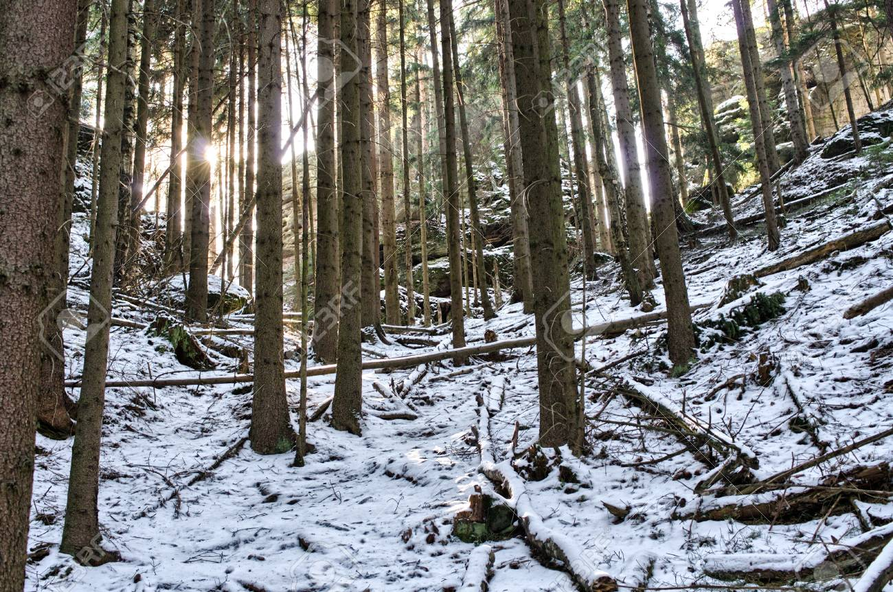 Deep in the snowy forest Stock Photo - 14415579