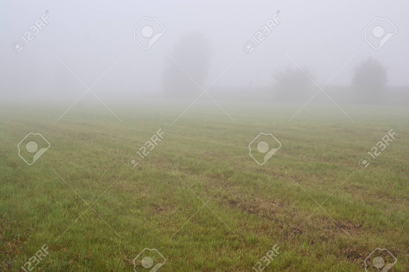 foggy grassland next to the Steinberger See in Bavaria Stock Photo - 10261934