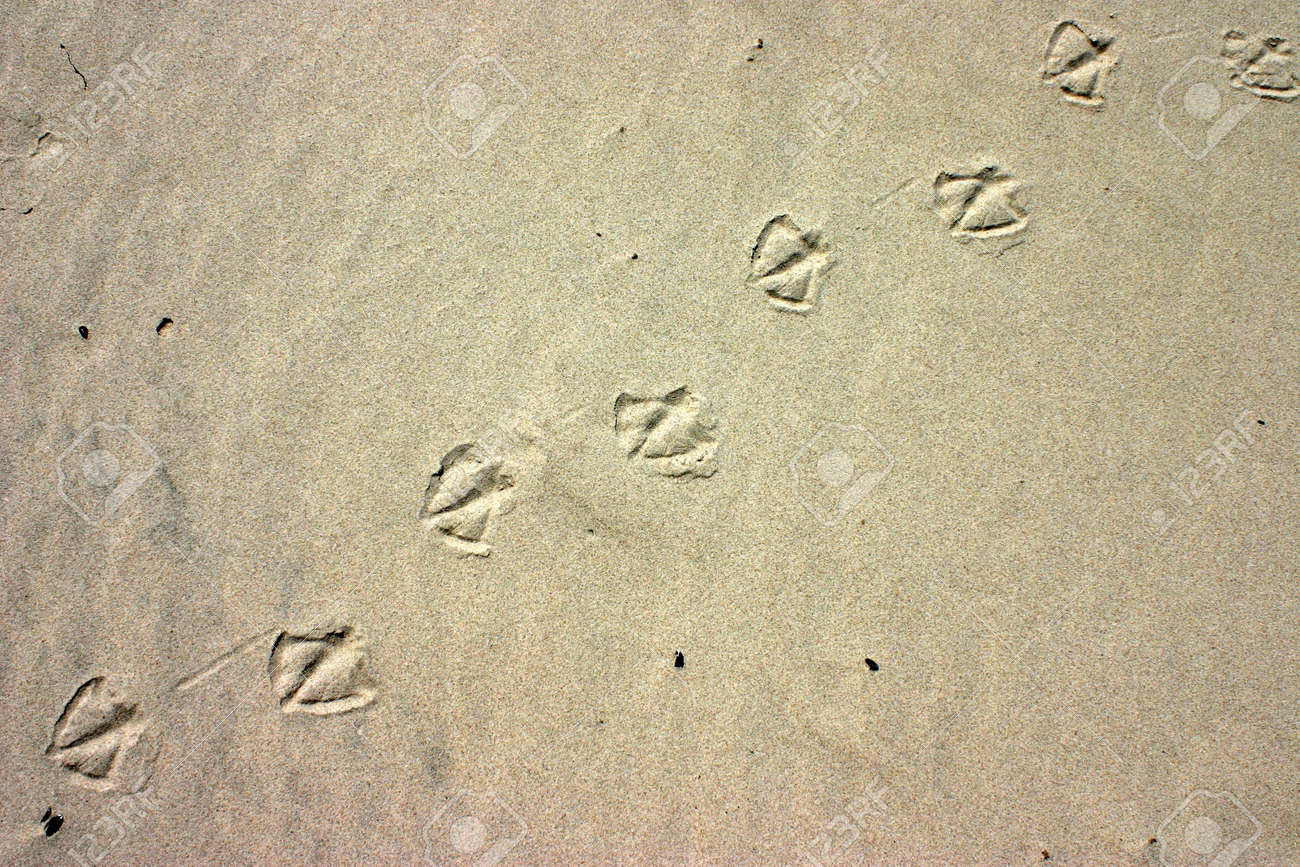 9a0b0e191 Deliberately High Contrast On The Sand With Bird Paw Prints