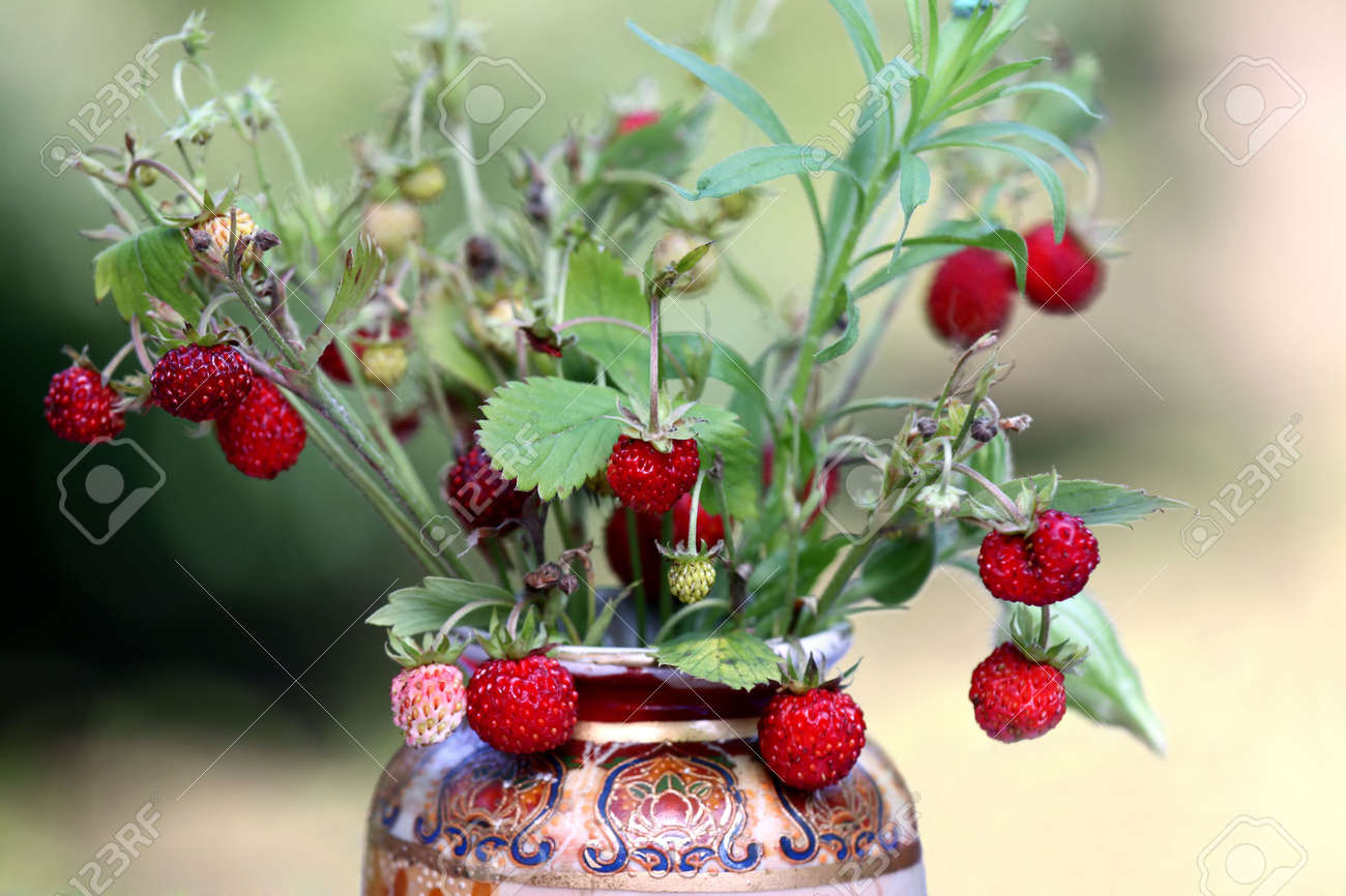 Wild Strawberry Bouquet Daped In Flower Vase Stock Photo, Picture ...