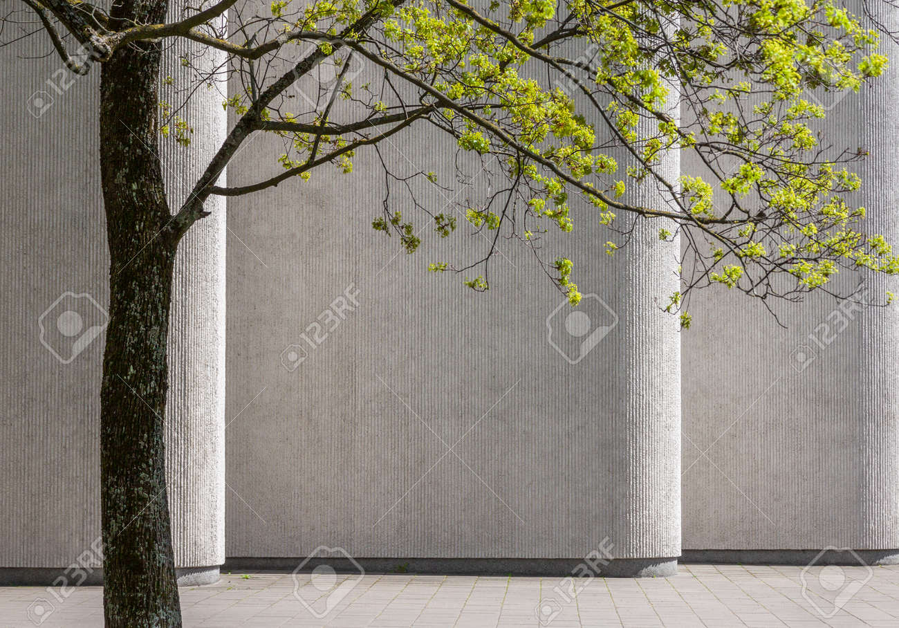 Green tree in springtime against background of concrete building wall - 54613798
