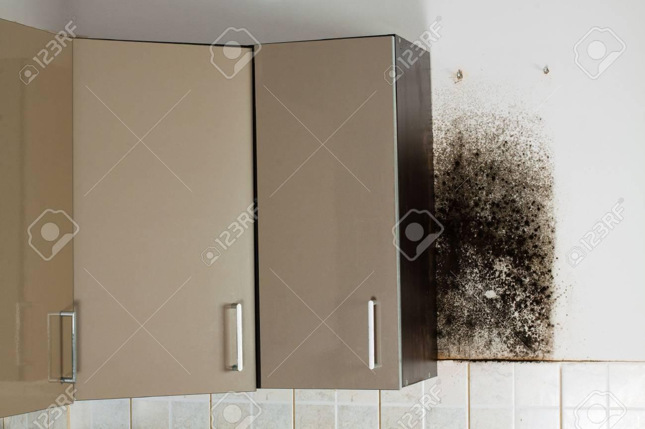 Schimmel Hinter Küchenschränke. Standard Bild   51672801