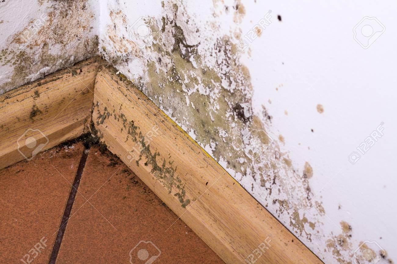 El Moho Y La Humedad En La Pared De La Acumulación De Esquina De Una ...
