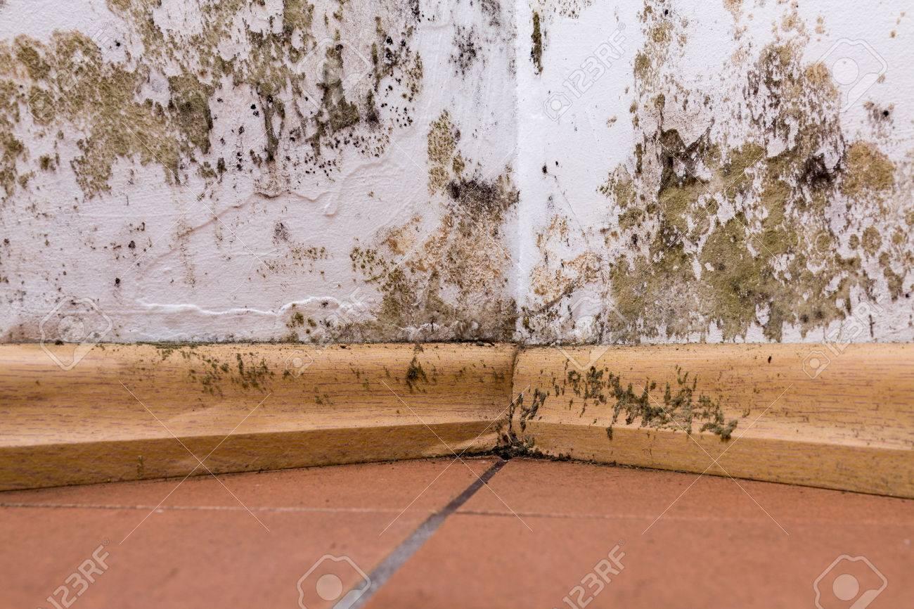 Humidité Dans Une Maison la moisissure et l'accumulation d'humidité sur le mur de coin d'une maison.