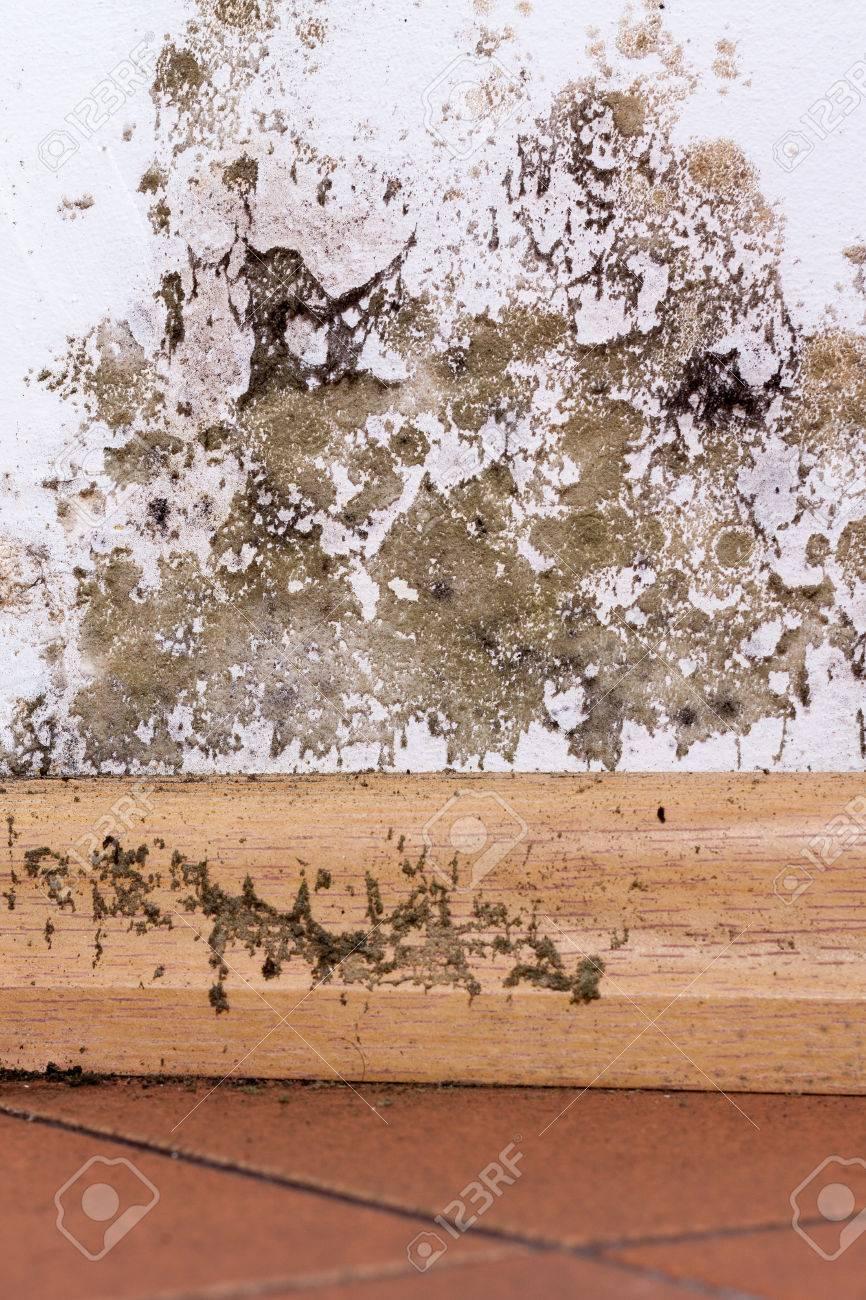 Moisissure Coin De Mur la moisissure et l'accumulation d'humidité sur le mur de coin d'une