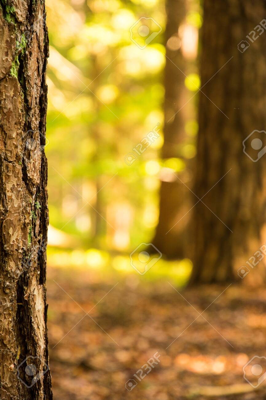 Background With A Blurred Forest In The Foreground With A Tree Stock Photo Picture And Royalty Free Image Image 128434230