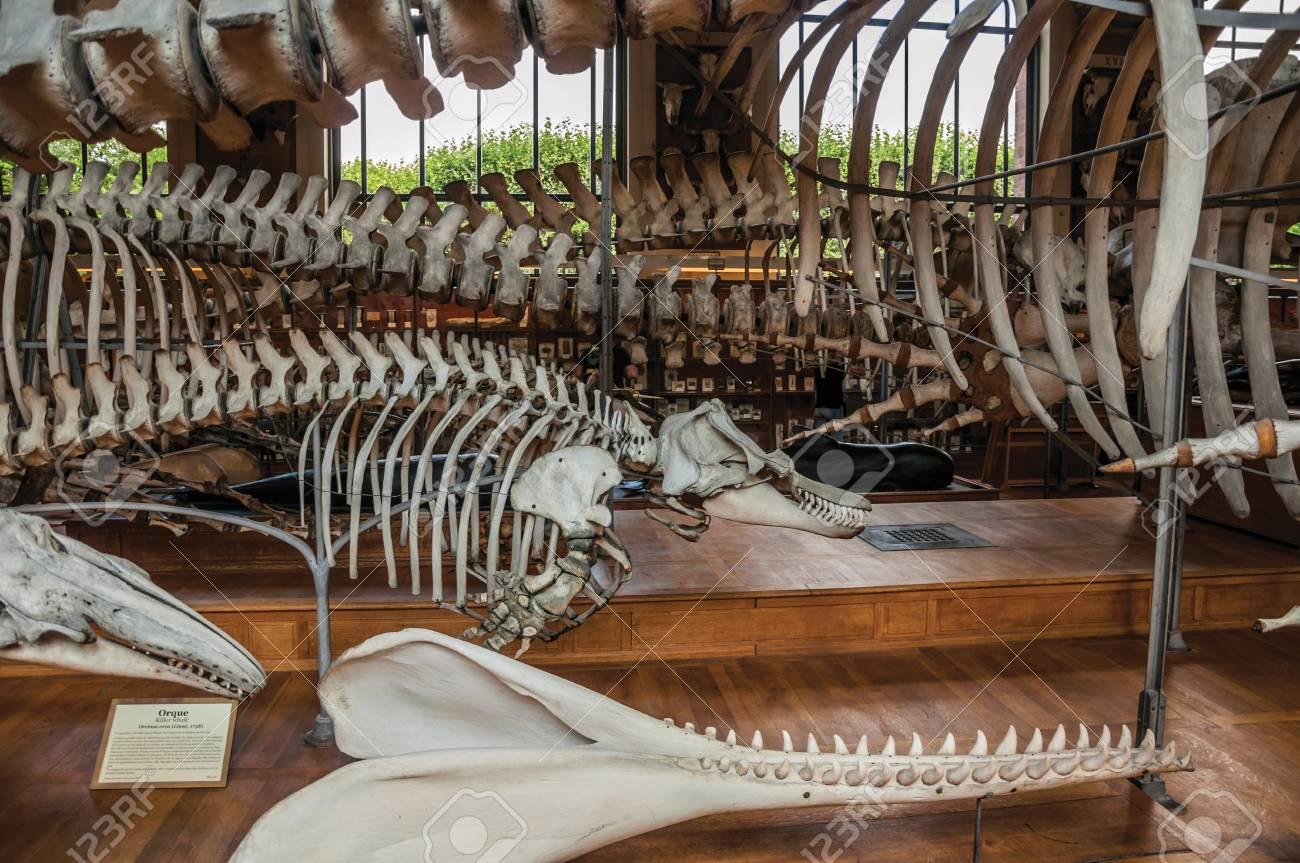 Paris Northern France July 10 2017 Skeletons Of Marine Mammals