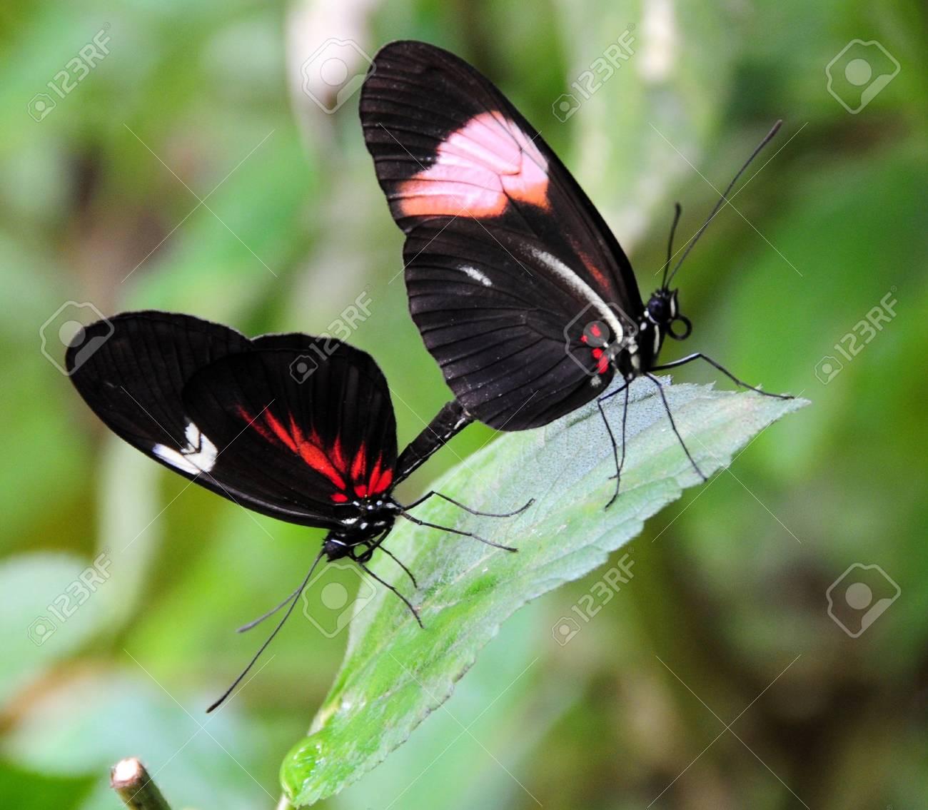 butterflies Stock Photo - 3348002