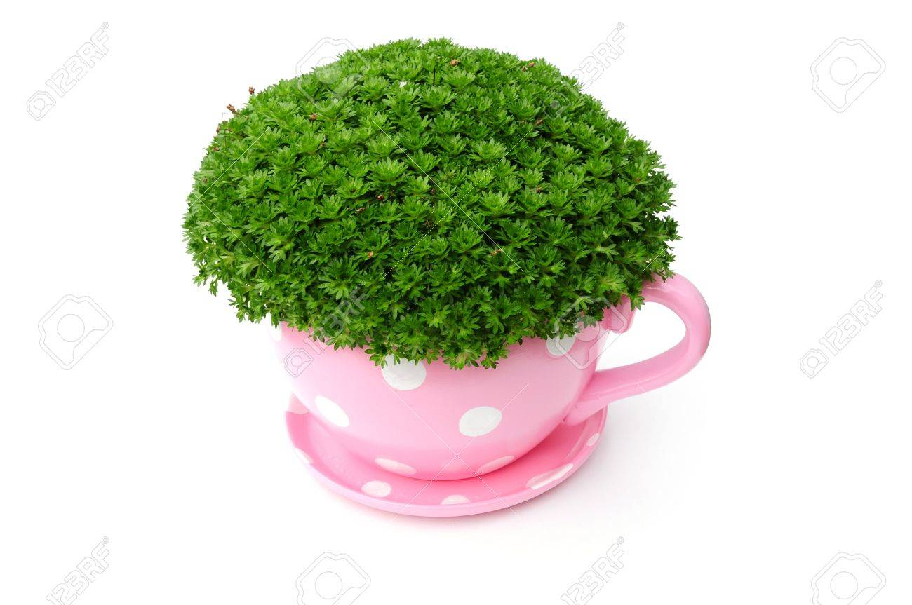 Giant Tea Cup Planter Stock Photo Picture And Royalty Free Image
