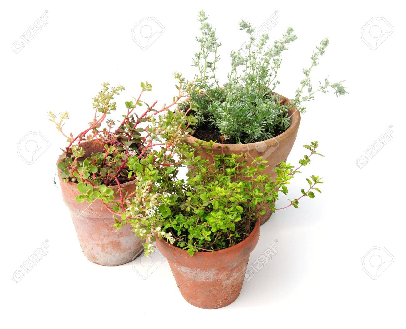 plants in pots Stock Photo - 6981114