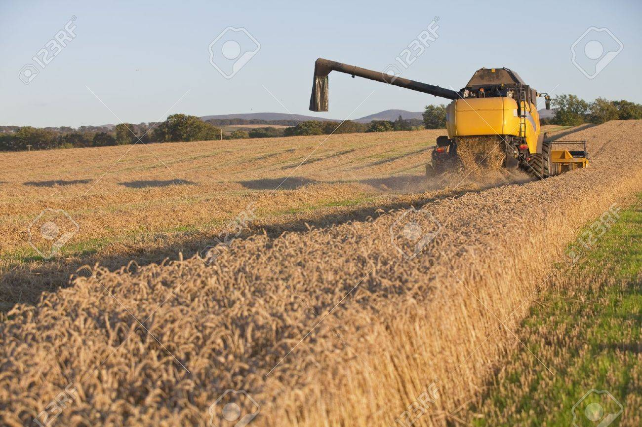 Harvesting combine in the field cropping the grain Stock Photo - 13586944