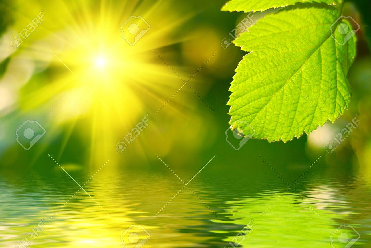 Fresh green leaf highlighted by sun. Stock Photo - 4601120
