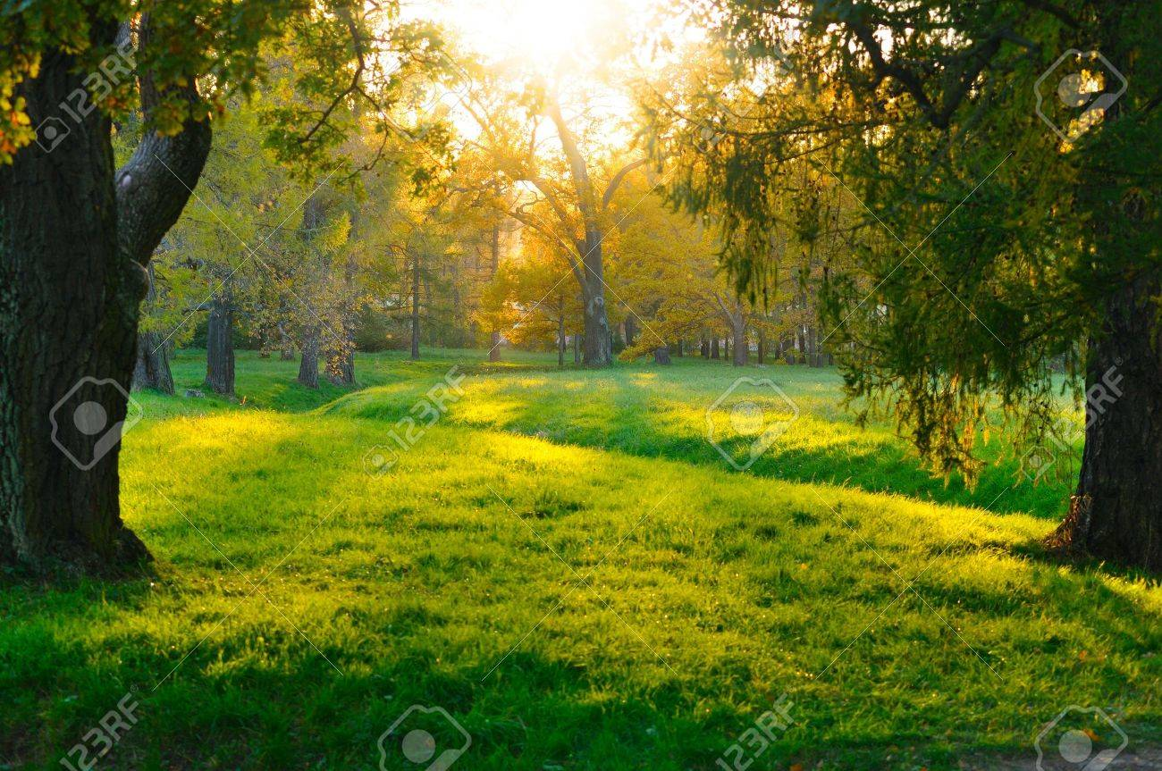 sunset in autumn forest Stock Photo - 8197954