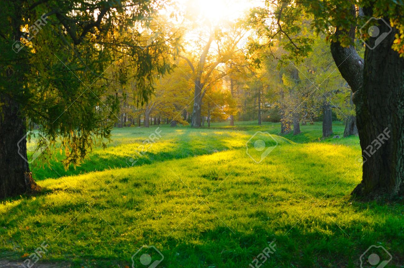 sunset in autumn forest Stock Photo - 13758294
