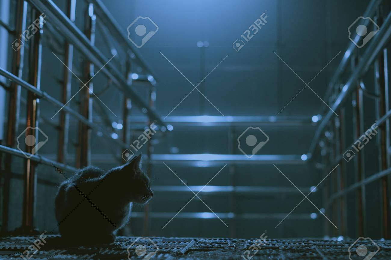Night City Cat Urban Wallpaper Background Texture Closeup Animal