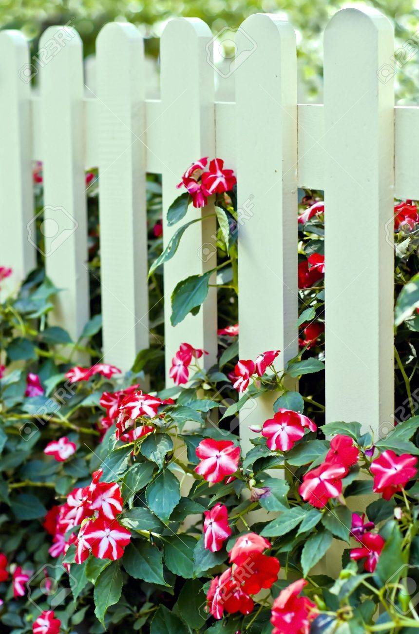 Image of white fence with flowers Stock Photo - 3781204