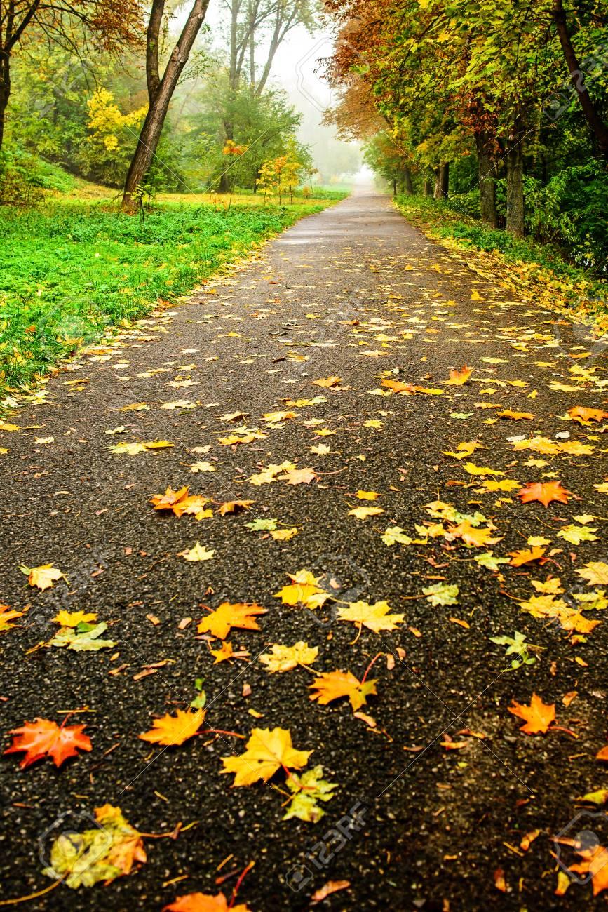 foto de Route Dans La Forêt D'automne. Paysage D'automne En Perspective ...