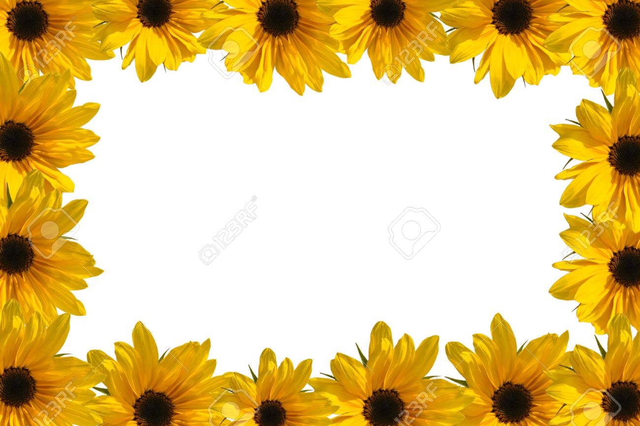 Yellow Frame Of Blooming Sunflowers With Copy Space Stock Photo ...