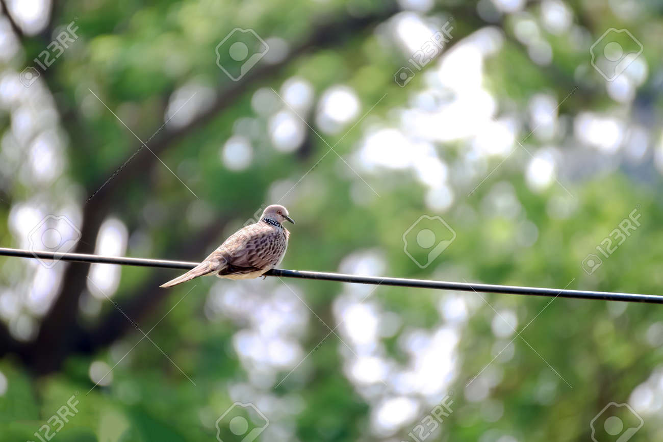 Dove bird on the electric cables wire - 169068090