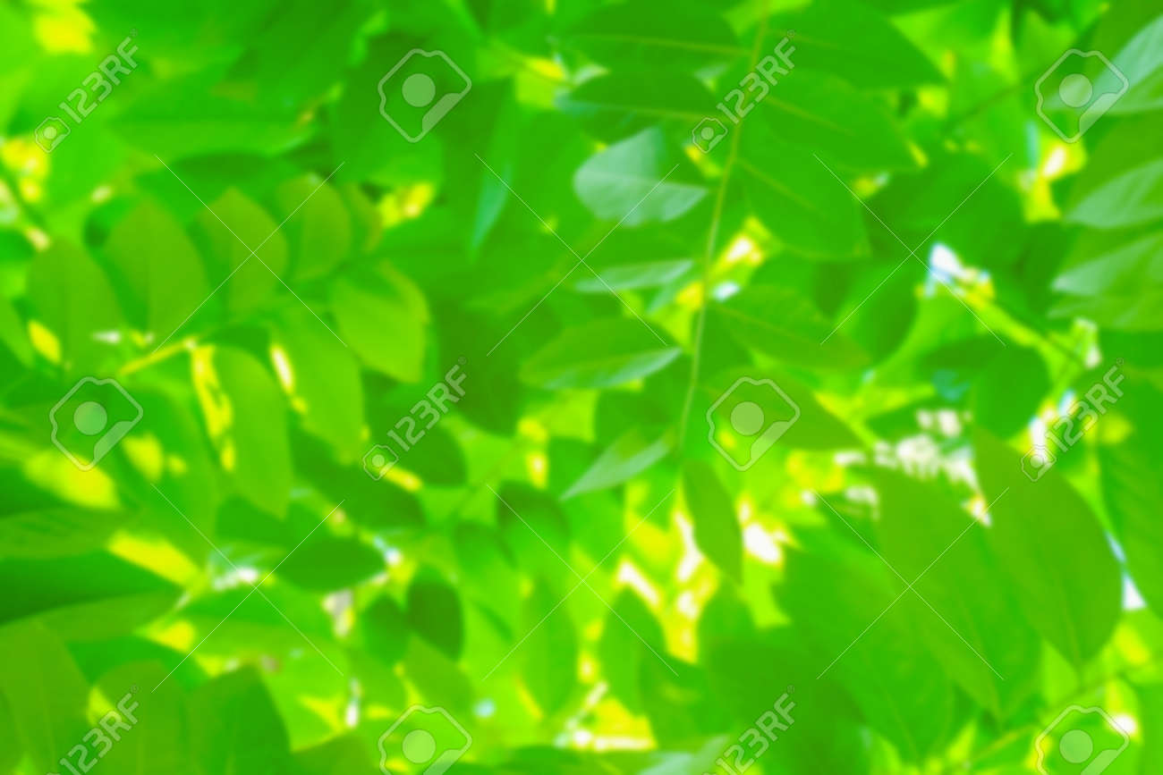 blurred leaf lush green for background, the leaves blur, foliage tree background blur - 169068099
