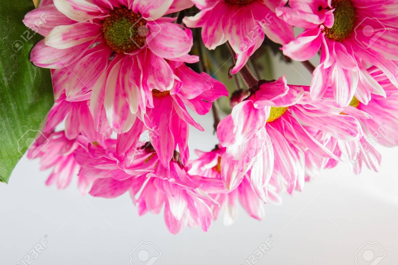 Beautiful flowers blooming light stock photo picture and royalty beautiful flowers blooming light stock photo 22970101 izmirmasajfo Images