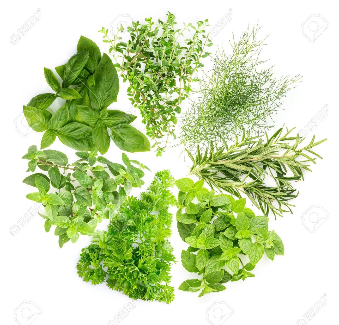 concept: la collecte de l'herbe est une plante utilisée pour l'arôme