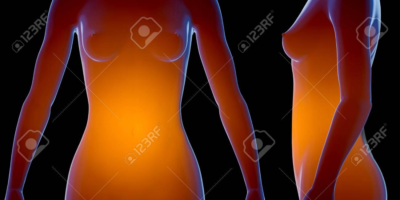 Charmant Weiblicher Körper Anatomie Organe Fotos - Menschliche ...