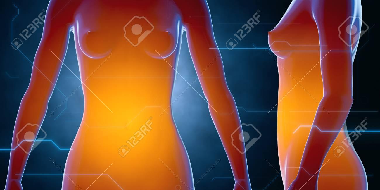 X Ray Menschlichen Weiblichen Körper. Anatomie-Konzept. 3D ...